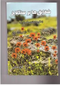 shaqayeq